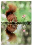 TAURUS-KUNSTKARTEN Eichhörnchen am See - Julian Ghareman-Rad Postkarte