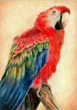 DANACARDS Papagei - Anna Fernandez Postkarte