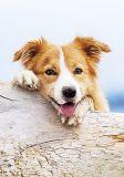 HARTUNG EDITION Entspannter Hund auf Holzstamm MEDLEY Postkarte