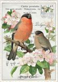 TAUSENDSCHÖN Zwei Vögel auf Obstblüten-Zweig Postcard Postkarte