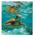AQUAPURELLA Schildkröte in Queensland, Australien - Bon Voyage Postkarte + Umschlag