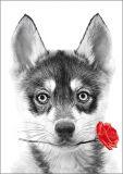 HARTUNG EDITION Husky Welpe mit Rose Kontraste Postkarte