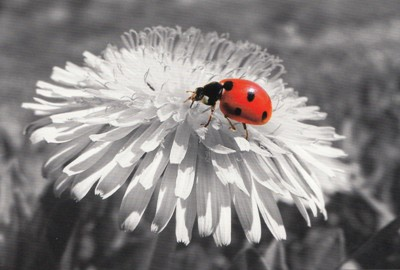 Abc Weiße Blume Mit Marienkäfer Moments Of Colour Postkarte