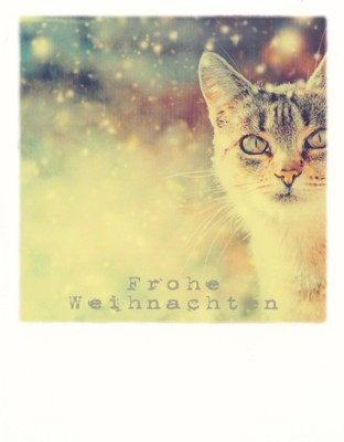Frohe Weihnachten Katze.Taurus Kunstkarten Frohe Weihnachten Katze Im Schnee Polacard