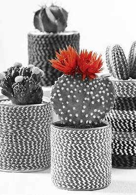 hartung edition kaktus mit roter bl te kontraste postkarte. Black Bedroom Furniture Sets. Home Design Ideas