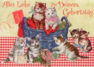 Gollong Zum Geburtstag Katzen Carola Pabst Postkarte
