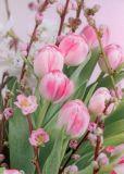 GOLLONG Tulpen und Baumblüten - Martina Carmosino Postkarte