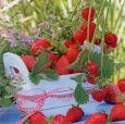 GOLLONG Erdbeeren - Martina Carmosino Postkarte