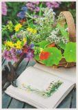 RANNENBERG Aus dem Bauerngarten geholt Postkarte
