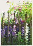 RANNENBERG Blumen am Gartenzaun Postkarte