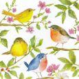 GOLLONG Vögel auf auf Ästen - Carola Pabst Postkarte