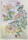 TAURUS-KUNSTKARTEN Blaumeisen & Tannenmeisen mit Geißblatt - Molly Brett Postkarte