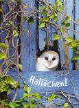 GOLDBEK Hallöchen! / Eule Lichtblicke Postkarte