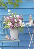 HARTUNG EDITION Blumen in Eimer vor blauer Wand MEDLEY Postkarte