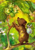 LOVELYCARDS Bär auf Nussbaum - Tanya Sytaya Postkarte