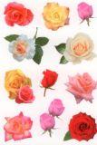Herma Rosenblüten Sticker