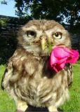 DANACARDS Oscar in love / Eule mit Rose - Katrin Kerou Postkarte