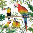 GOLLONG Happy Birthday / Papageien - Carola Pabst Postkarte