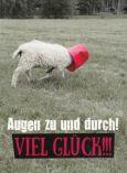 GOLDBEK Augen zu und durch! Viel Glück!!! / Schaf mit Eimer Hangover Postkarte