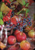 GOLLONG Herbstliche Beeren und Äpfel - Martina Carmosino Postkarte