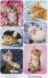 AVANsticker Katzenfotos Sticker
