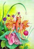 DANACARDS Himbeer Elfe - Jasmine Binder Postkarte