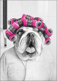 HARTUNG EDITION Hund mit Lockenwicklern Kontraste Postkarte
