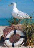 HARTUNG EDITION Möwe auf Stein MEDLEY Postkarte