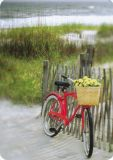 HARTUNG EDITION red bike with flower basket MEDLEY postcard