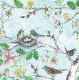 GOLLONG birds with spring blossoms - Kerstin Heß postcard