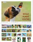 TUSHITA Dogs postcard book