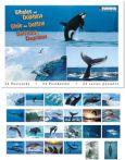 TUSHITA Whales and Dolphins Postkartenbuch