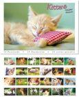 TUSHITA Kittens Postkartenbuch