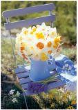 RANNENBERG daffodils on blue chair postcard