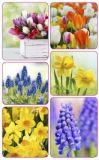 AVANsticker Frühlingsblumen Fotos Sticker