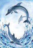 FLORIS Drei Delfine Jan Klappkarte m. Umschlag