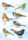 FLORIS Sieben Vögel Klappkarte m. Umschlag