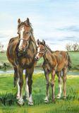 FLORIS Pferd mit Fohlen Klappkarte m. Umschlag