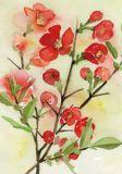 FLORIS Roter Strauch Postkarte