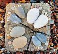 AQUAPURELLA Füße aus Steinen - Amalgame Postkarte