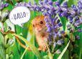 GOLDBEK Hallo / field mouse Lichtblicke postcard