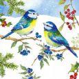 GOLLONG Blaumeisen im Schnee - Carola Pabst Postkarte