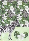 HARTUNG EDITION Zebras NATURE Postkarte