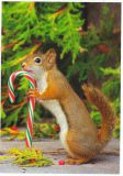 RANNENBERG squirrel with candy cane postcard