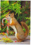RANNENBERG Lecker Zuckerstange / Hörnchen Postkarte