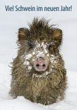 EYE-COMM Viel Schwein im neuen Jahr / Wildschwein im Schnee Postkarte