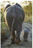 RANNENBERG Kleinstfamilie / Elefant mit Jungem Postkarte