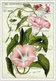 TAUSENDSCHÖN Petunie Postcard Postkarte