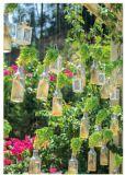 RANNENBERG fresh basil roots postcard
