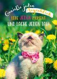GOLDBEK Genieße jeden Augenblick / cat with bow Lichtblicke postcard